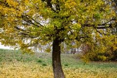 sonjahwolf / Herbst