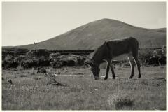 chris_m / Lanzarotischer Esel