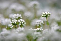 Markus / Botanischer Garten