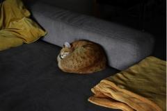 niela86 / die goldene Mitte - Nachbars Katze liebt mein Sofa