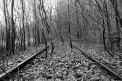 Lumivers / Scheinen und Bäume