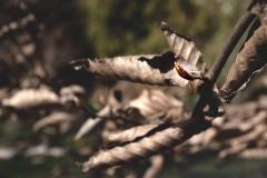 fotoLise / windiger frühling