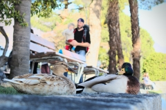 ylz / happy ducks