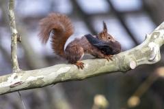 Eichhörnchenumzug mit Kind