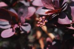 niela86 / purple love