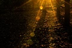 danny / Sonnenstrahlen