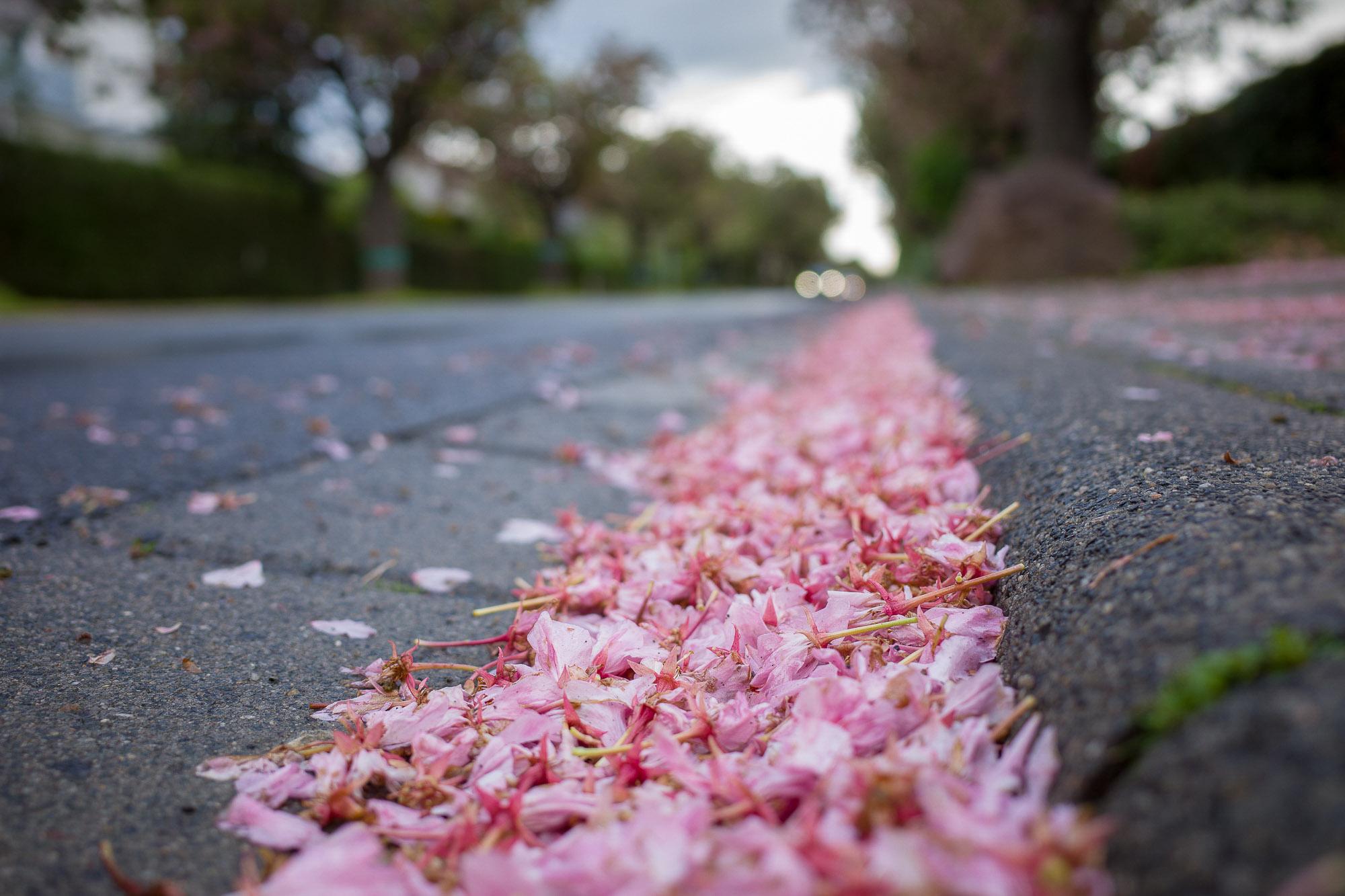 babblfisch / Kirschblütenmassaker