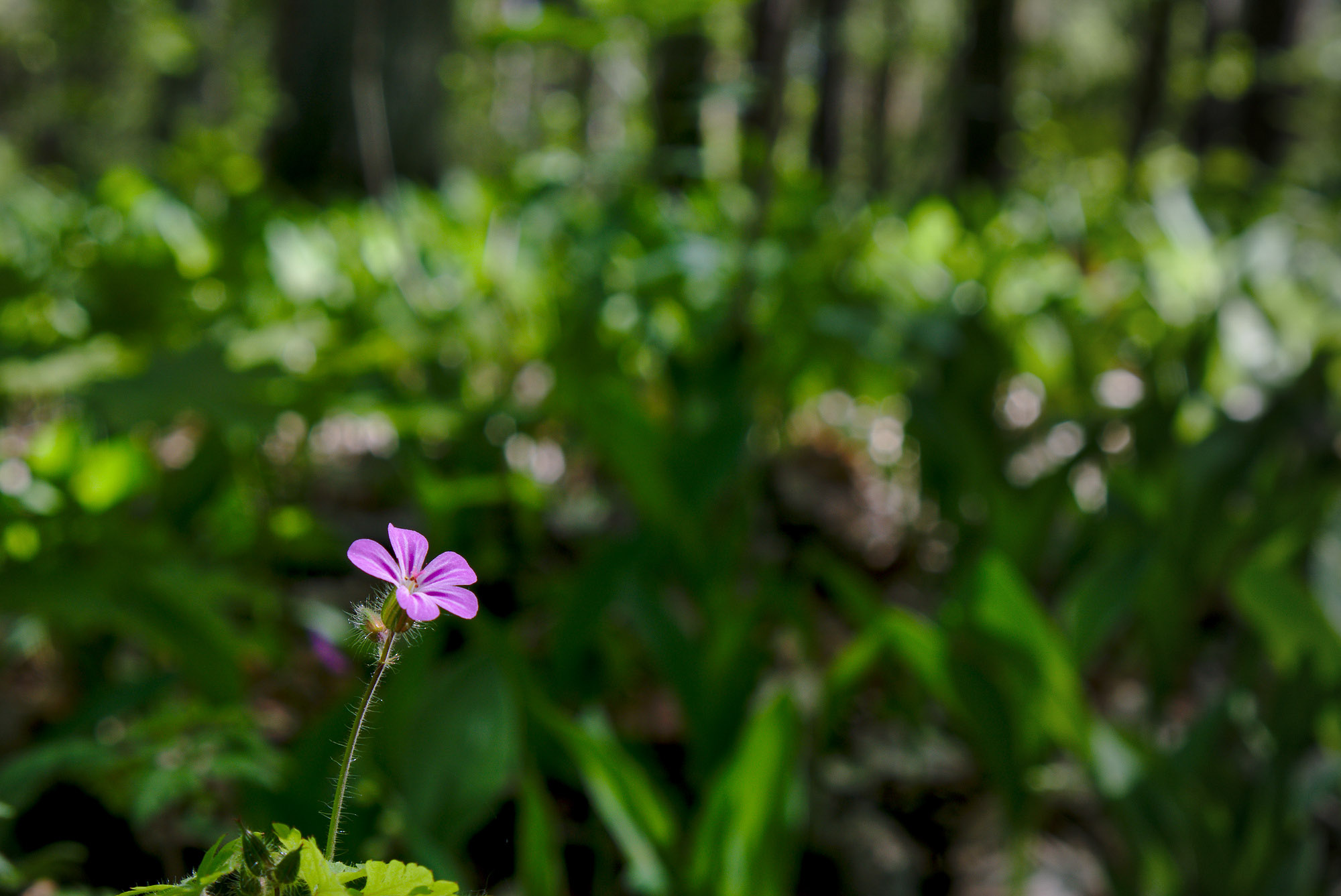 Markus / Bluete im Wald