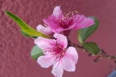 Moni / Pink