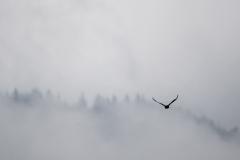 Wald in den Wolken