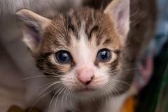 babblfisch / Katzenbaby