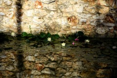 niela86 / Ich see Rosen an der Wand