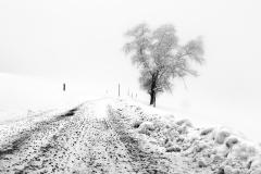 schneehaesli / Dieser Weg