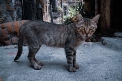 heikehartmann / cat