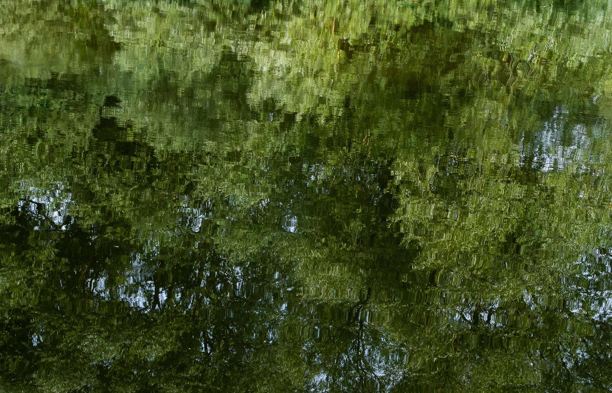 katzenfreund/grün