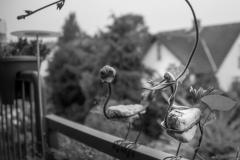 Lumivers / der Würgegriff