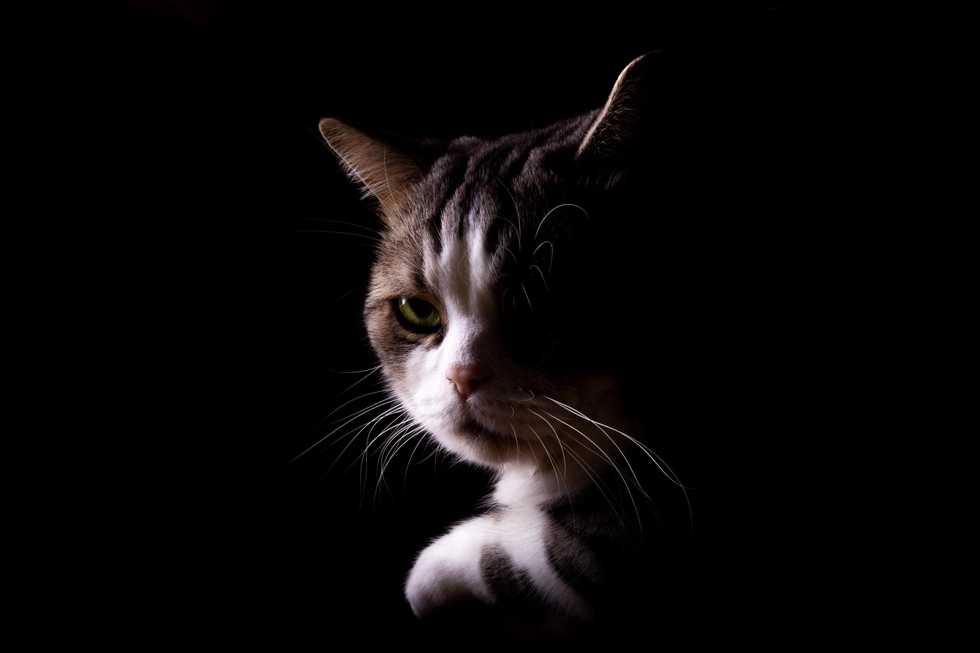 ollo / Hungrige Katze