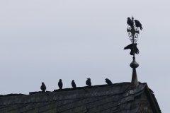 Silke - Kronberger Vögel