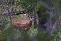 Neckepin / wild life