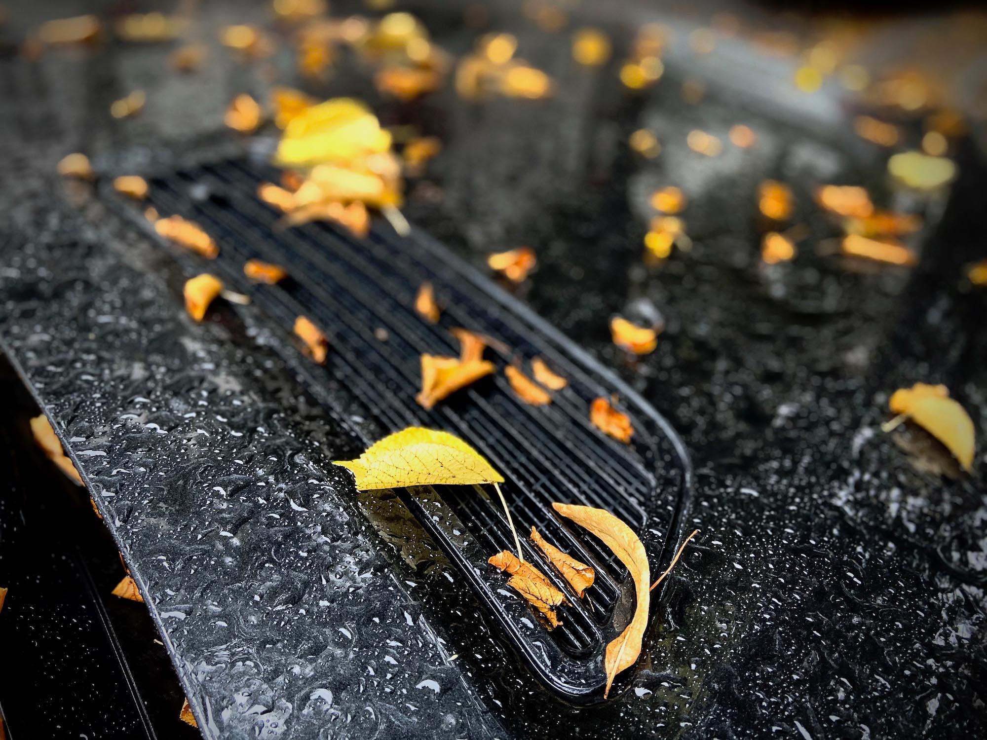 Photoauge / Autumn