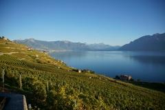 Herbststimmung - Lavaux Lac Leman