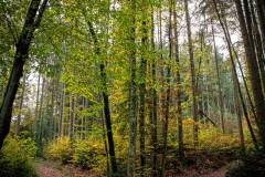UnclePete / Herbstliche Symmetrie