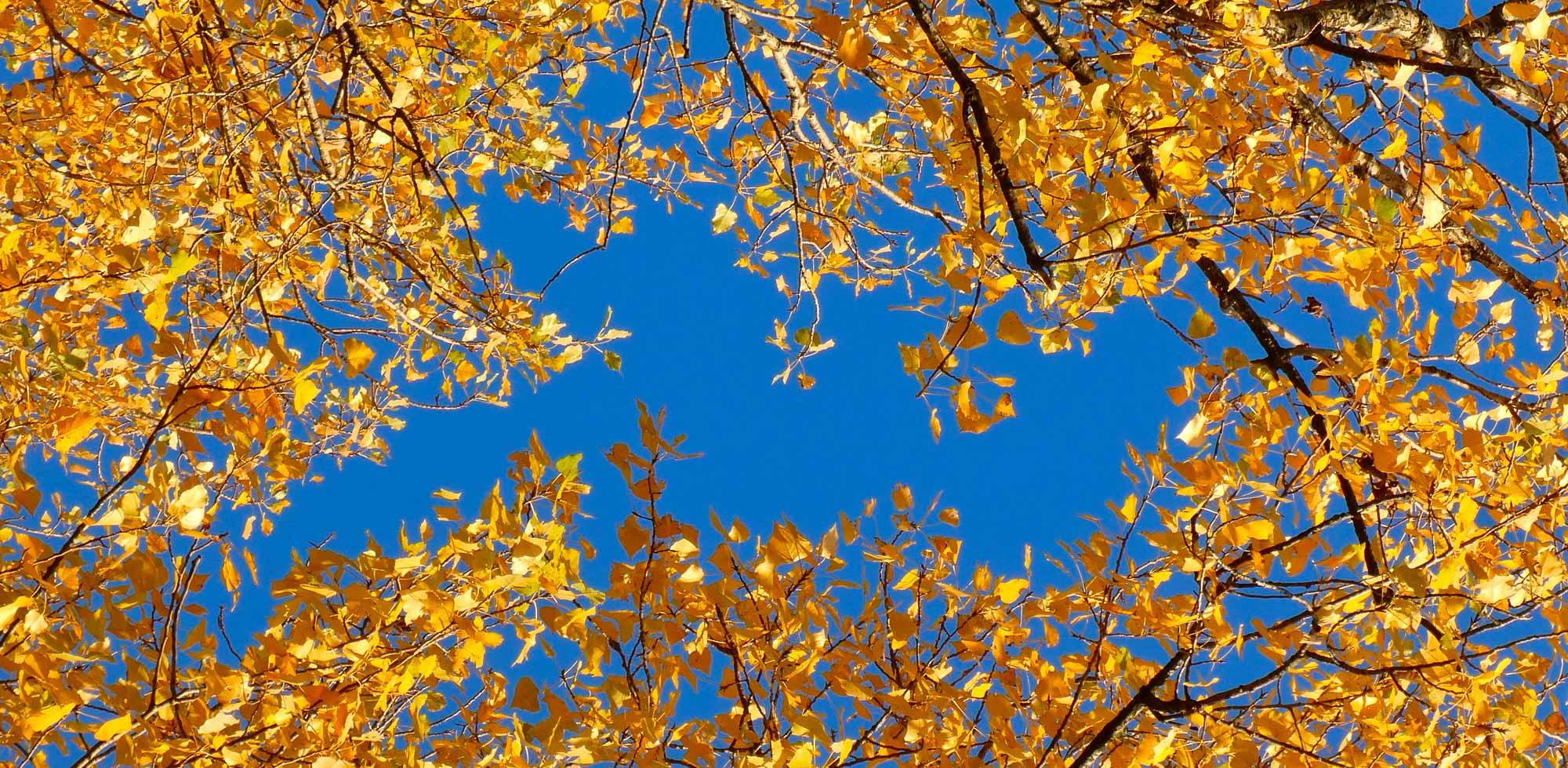 Gold-Blau