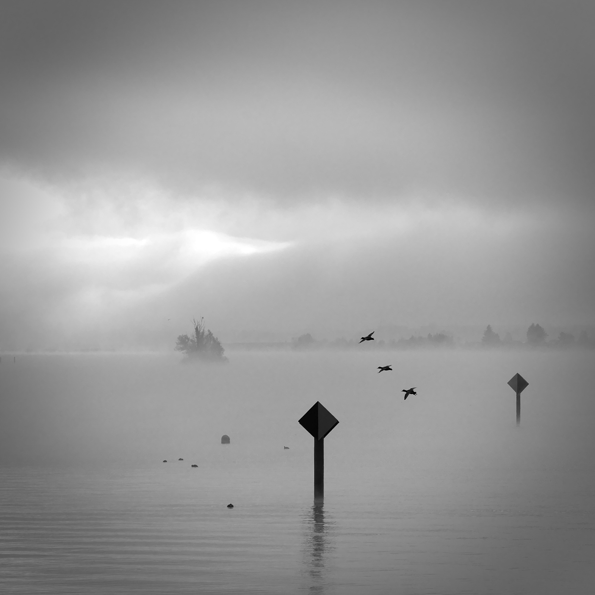 ylz / ducks in mist