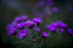 Späte Blüten