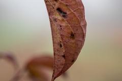 JoergSack / Herbst