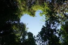 Blick nach oben