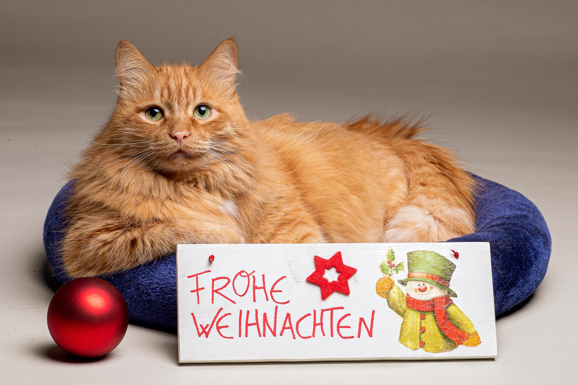 babblfisch / Weihnachtskarte