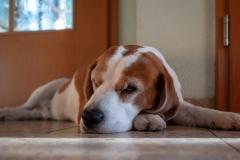 babblfisch / Filou braucht ruh