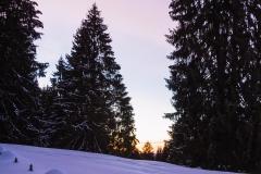 lexx_photo / Im Schnee