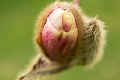 Frühling in der Wilhelma