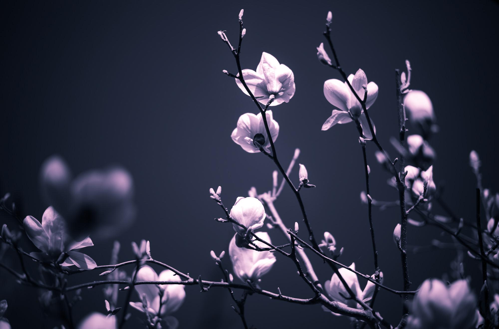 Frühlingserwachen trotz dunkler Zeiten.