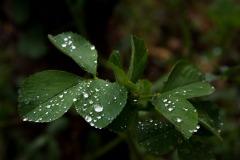 bei Regen und Homeoffice übt man im eigenen Garten