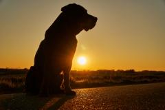 #bestehundderwelt