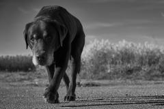 #bestehundderwelt II