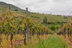 Mai-Wanderung durch Weinberge