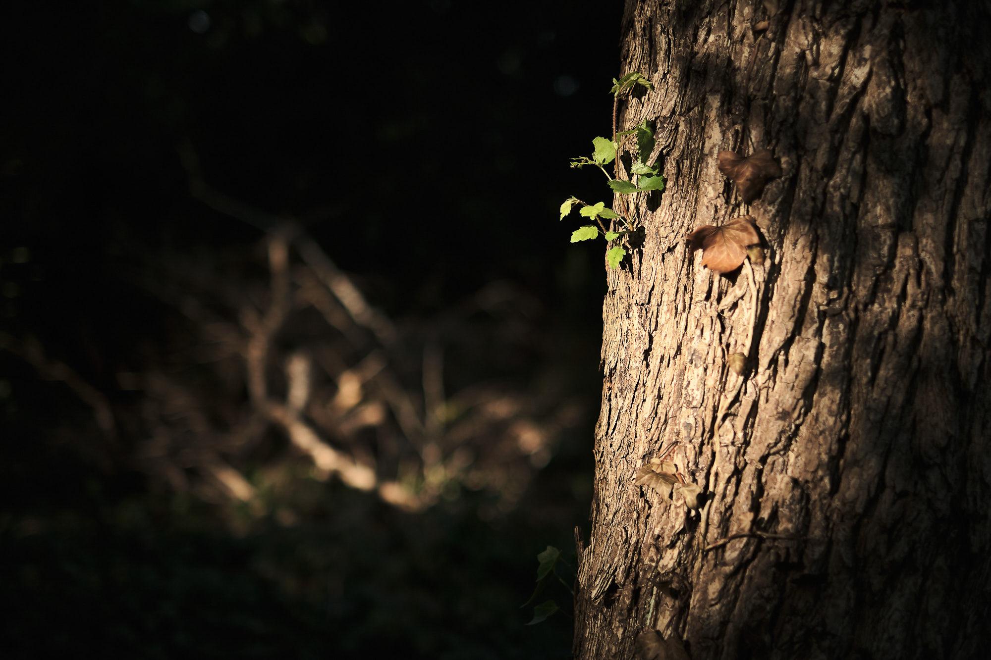 der kleine Baum