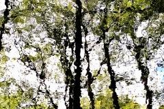 Spiegelung Baumgruppe