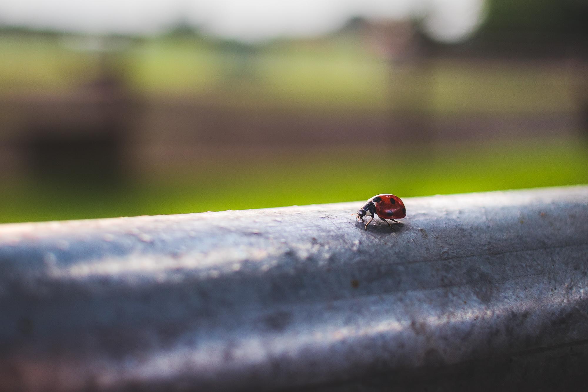 Ä Roter Käfer...