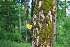 Schild im Baum