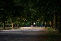 Lindenallee im Abendlicht