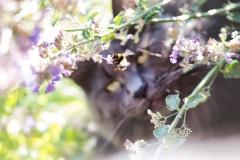 Da macht man einmal ein Bienenbild...