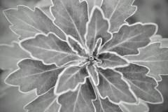 mal wieder muss freitags die erstbeste Pflanze im Garten als Motiv herhalten :)
