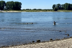 Rheinkilometer 705