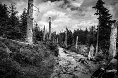 Trockenheit, Sturm und Borkenkäfer - Endzeitstimmung im Wald.