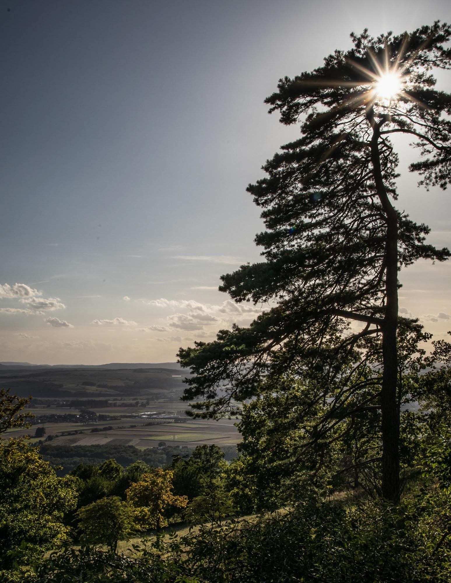 Baum trifft Sonne